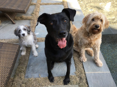 The pups: Riley, Nelly and Bailey