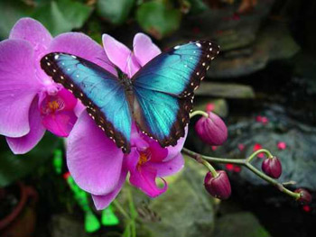 Flying Colors Butterfly Festival