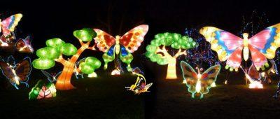 butterfly-700x297