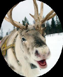 reindeer-smile-248x300